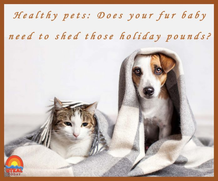 Healthy-pets-cover-utkal-today