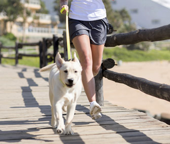 running-with-dog-healthy-pet-utkal-today